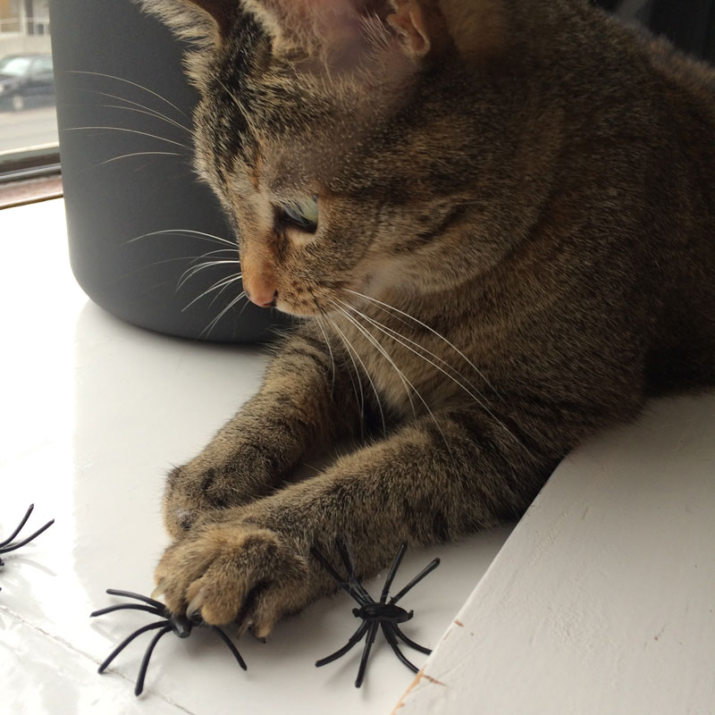 Bonbon is aan het spinnen