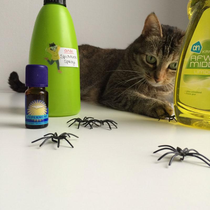 Geen spin ontsnapt aan de aandacht van Bonbon