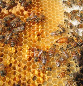 Vegan FAQ #3: Waarom gebruiken veganisten geen honing?