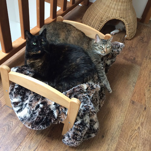 Een groot succes bij de katten